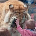 Домашние животные для детей. Выбор питомца для ребёнка.