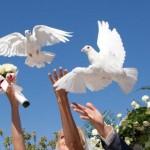 Отпускаем голубей