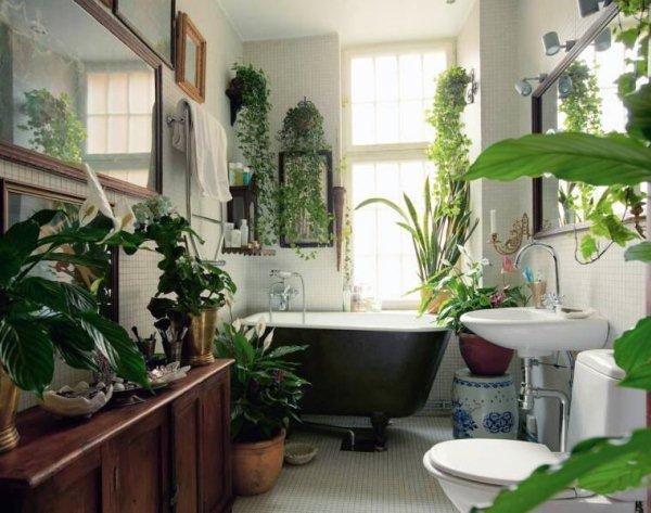 Rastenija v vannoj Дизайн маленькой ванной комнаты