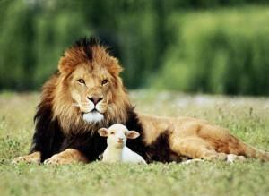 Совместимость Овна со Львом